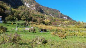 paesaggio valbelluna verde prati feltre