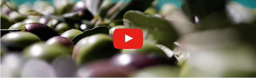 Olio del Garda olive