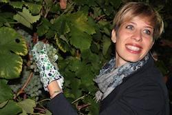 vigne di Sarah