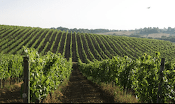 save the date a passeggio tra uve mature di toscana