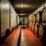 Al Castello di Roncade, il dietro le quinte dei grandi vini, 17 e 18 gennaio 2020 a Roncade.Evento riservato al settore,guidato da Umberto Trombelli enologo